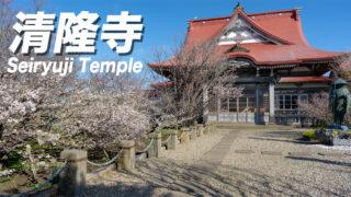 【桜前線の終着点】北海道根室市の清隆寺で千島桜が開花