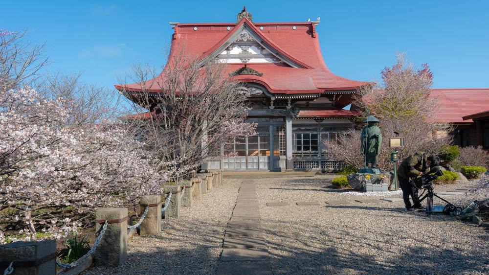 清隆寺の桜 まとめ