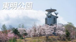 北海道美唄市『東明公園の桜』開花状況をお知らせ【ライトアップ情報も】